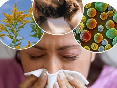 аллергия какие виды бывают фото и название