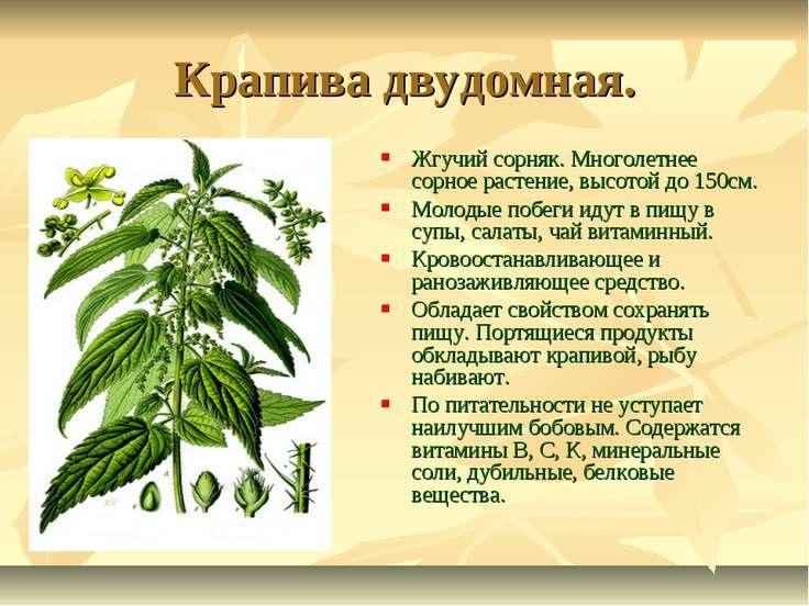 компонент весеннего салата