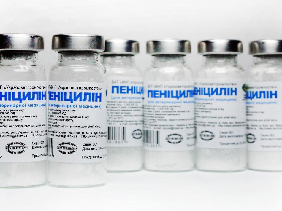 История открытия пенициллина - Здоров-Инфо
