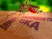 В Украине отсутствуют комары-переносчики вируса Зика
