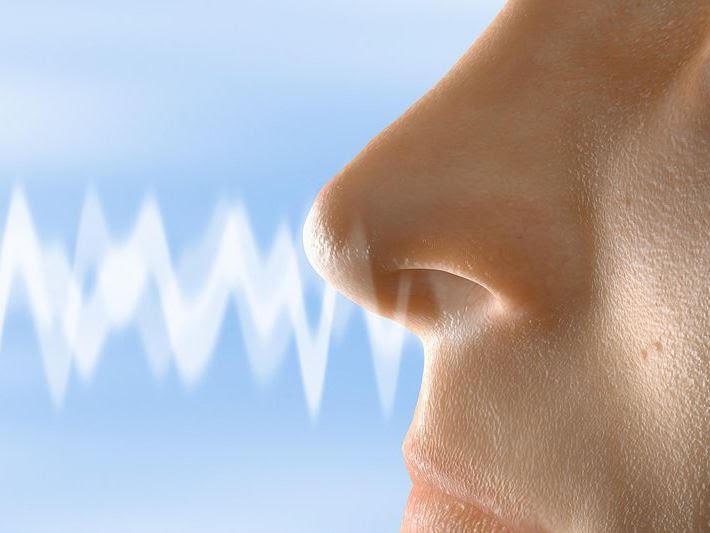 Презентацыя.Сенсорні системи смаку і нюху дотику і рівноваги | 533x710